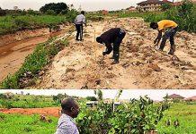 Afforestation Extension