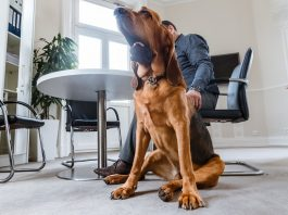 FILED - Too many people are making it easy for hackers to guess their passwords by using their pet's name, according to new cybersecurity research. Photo: Markus Scholz/dpa