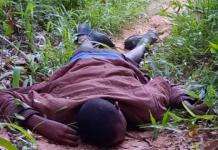 death of herdsman