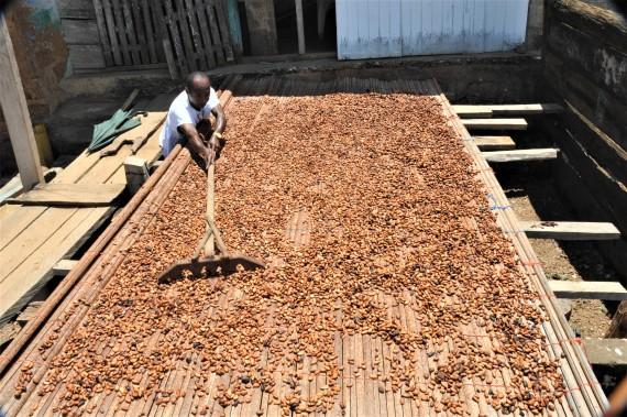 A Ghanaian cocoa farmer dries cocoa beans under the sunshine on a plantation in Eastern Region, Ghana, on May 11, 2021.(Xinhua/Seth)