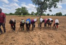 Some of the farmers in group sowing