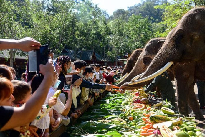 A worker of the Wild Elephant Valley scenic spot in Dai autonomous prefecture of Xishuangbanna, southwest China's Yunnan province, throws a birthday party for a one-year-old Asian elephant, in a bid to raise public awareness of protecting the animal and help more people learn the achievements in breeding and protecting Asian elephants, Feb. 22, 2021. (Photo by Li Ming/People's Daily Online)