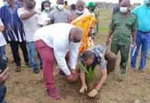 Mr Peter Maala, Regional Coordinating Director, planting a tree on behalf of the Regional Minister