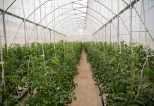 Fresh Green Ghana Project