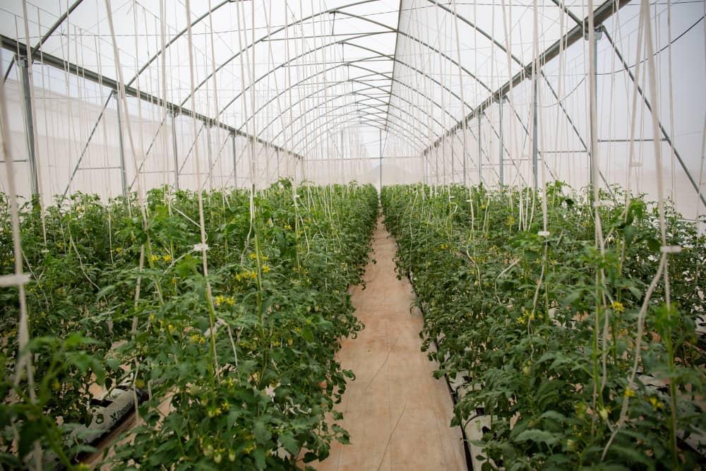President Akufo-Addo's green Ghana agenda on course