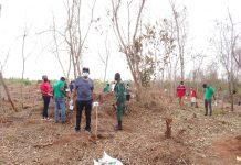 Vodafone Ghana Foundation plant trees