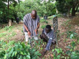 Social Tree Planting