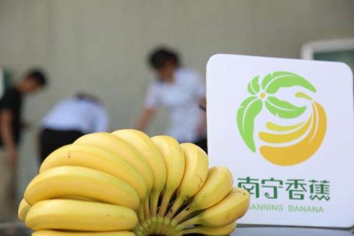 Bananas produced in Nanning city, capital of south China's Guangxi Zhuang autonomous region. (Photo from the website of the Department of Agriculture and Rural Affairs of Guangxi Zhuang Autonomous Region)