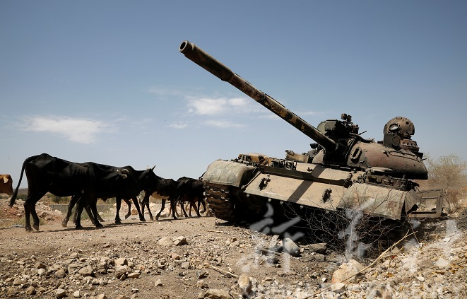 Cows walk past a tank damaged in fighting between Ethiopian government and Tigray forces, near the town of Humera, Ethiopia, March 3, 2021. Picture taken March 3, 2021. To match Special Report ETHIOPIA-CONFLICT/EXPULSIONS REUTERS/Baz Ratner